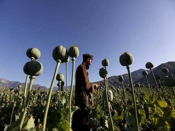 Triumph of Narco-Terrorism in Afghanistan and Threat to India